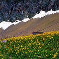Flowers and Snowline print