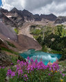 Fireweed and Lower Blue Lake print