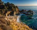 McWay Falls and Pampas Grass print