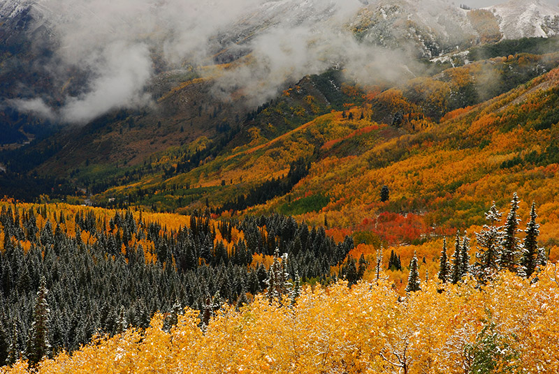 Wasatch, autumn, Big Cottonwood, Wasatch-Cache, fall colors