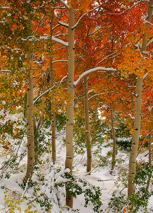 The only thing that beats brilliant fall colors is brilliant fall colors + an early snow. Technically, white is the combination...