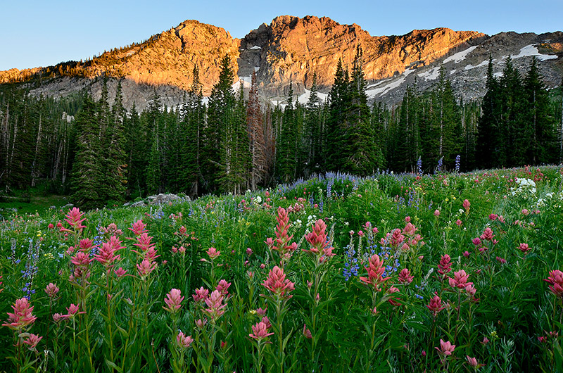 Devil's Castle (10,920') is perhaps the most recognizable part of the backdrop at Albion Basin. Summer wildflowers typically...