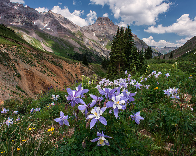 Before heading up Mount Sneffels for a night of photographing stars at high altitude, I spent some time searching for columbine...