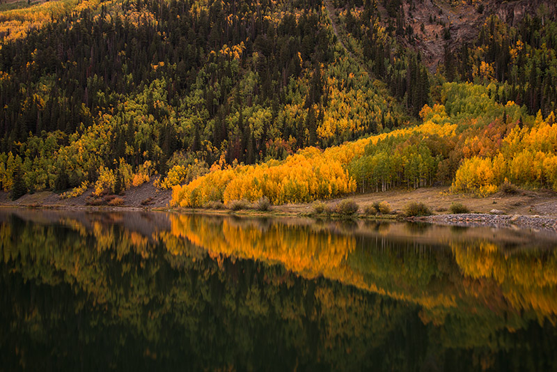 My favorite time of day to photograph fall colors: dusk. No harsh contrast between sun and shade, and the aspens...
