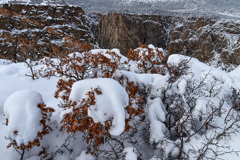 Burnt-orange leaves cling to these scrub oaks under new snow at Devil's Lookout.