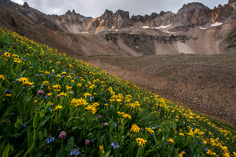 This slope of lush wildflowers lies just beside a garden of talus and scree below a ridgeline that reaches above 13,000'.