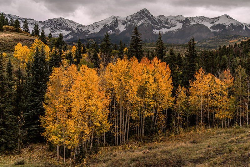 A late-September snowstorm builds over the Sneffels Range at the fall-color peak of these aspens. Just a few minutes after...