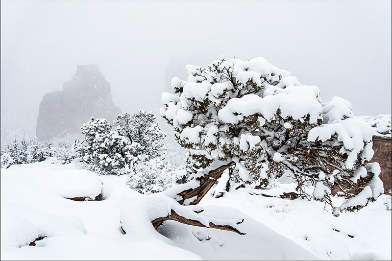 Falling snow and fog obscured the Monument's sandstone formations in delightful ways on this magnificent winter day. I...
