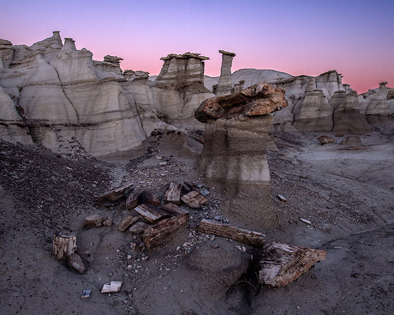 Scattered among the hoodoos and badlands of the Bisti/De-Na-Zin Wilderness are petrified trees, reminders that this barren desert...