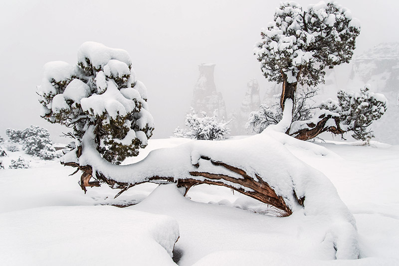 I spent a few hours on a recent snowy day in the Colorado National Monument as snow poured and clouds shrouded, then revealed...