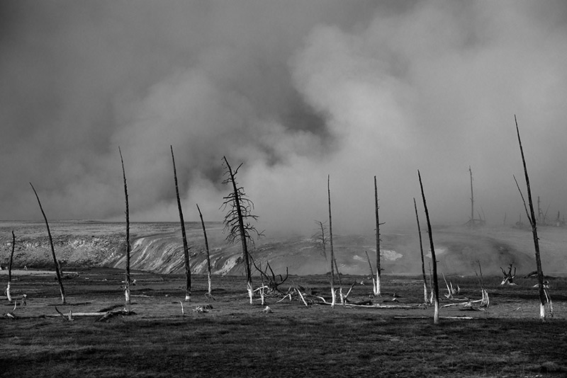 Ever since my first visit to Yellowstone, I've been struck by how melancholy these dead trees in Black Sand Basin seem....